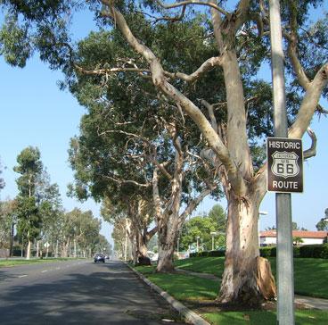 rte66_trees